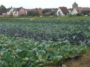 vegetable patches around Sennfeld